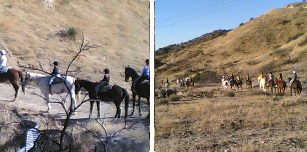 Trail Rides and Riding Clinics